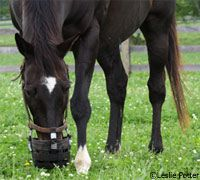 glossary of equine nutrition terms