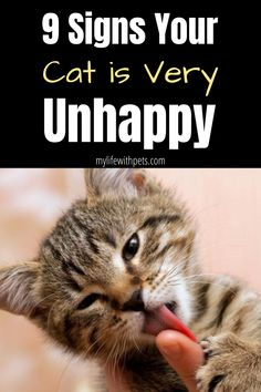 Cat Behavior Problems, Cat Biting, Cat Pee, Kitten Care, Cat Urine, Cat Care Tips, Cat Grooming, Cat Health, Funny Cats