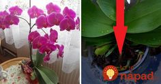 To je nápad! Indoor Plants, Orchids, Vegetables, Ale, Twitter, Inside Plants, Vegetable Recipes, Indoor House Plants, Lilies