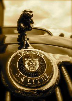 Jaguar Car Mascot Photograph by John Colley http://john-colley.artistwebsites.com/featured/jaguar-car-mascot-john-colley.html