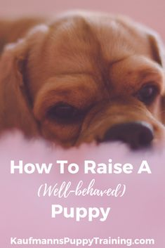 How To Raise a Well-behaved Puppy - In this blog post, I'll give you my best advice on how to raise your puppy to become a grown dog in harmony. Both you and your dog will feel more confident and secure. And your dog will want to please and obey you, even when you do not force her. Read at www.kaufmannspuppytraining.com #dogtraining #puppytraining #puppy #doglovers #puppies #training #dogmom