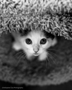 peek a boo by Christopher Cox on 500px