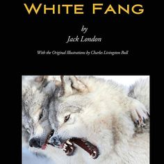 White Fang (Wisehouse Classics - with original illustrations) by Jack London http://amzn.com/9176372030 #FREE #EBOOKS