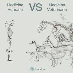 Human medicine versus Veterinary medicine