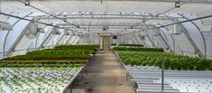 Hydroponic systems offer growers benefits like increased plant productivity, a high yield per plant per square foot and fresh produce regardless of season or ground temperature. See all of our Hydroponic Systems on our website ➡️ Hydroponic Farming, Hydroponics System, Aquaponics System, Hydro Systems, City Farm, Greenhouse Plans, Productivity, Environment, Backyard