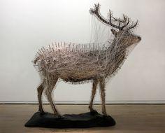 art et taxidermie par Julien Salaud
