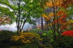 From the website Earthshots - a beautiful garden in the fog.