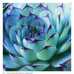 Take a look at this Colorful Cactus Wrapped Canvas today! Cacti And Succulents, Planting Succulents, Cactus Plants, Planting Flowers, Indoor Cactus, Succulents Wallpaper, Succulents Drawing, Propagating Succulents, Cactus Art