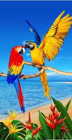 Pin on Birds Most Beautiful Birds, Beautiful Nature Pictures, Animals Beautiful, Cute Animals, Farm Animals, Nature Animals, Amazing Nature, Colorful Parrots, Colorful Birds