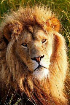Majestic!!!