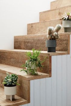 Inviting a natural atmosphere to your interior design is not only about greenery or other mainstream plants. Placing a unique cactus inside your lovely room will be a brilliant game changer. Cactus is a good alternative Interior And Exterior, Interior Design, Interior Decorating, Wood Stairs, Basement Stairs, Attic Stairs, Indoor Plants, Potted Plants, Potted Succulents