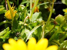 A spider called Jeffrey, a short story on the Wild Library blog Tiny spider covered in pollen