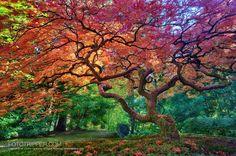 Portland Japanese Garden Oregon http://www.fototripper.com/how-to-shoot-portland-japanese-garden/