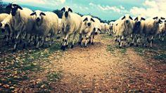 IMG_20140424_110707 (1) Horses, Animals, Camino De Santiago, Animales, Animaux, Animal, Animais, Horse