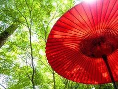 Sunkissed Umbrella - Yuri Ikeyama