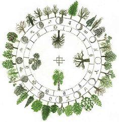 Il calendario, lo zodiaco e l'oroscopo celtico segno per segno