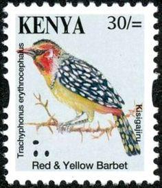 Red-and-yellow BarbetTrachyphonus erythrocephalus
