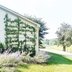 Espalier on wall yesssss. Like idea of Russian sage as shown here. Even better? Russian Sage, Garden Trellis, My Secret Garden, Pennsylvania, Garden Landscaping, Countryside, Outdoor Living, Lavender, Outdoor Structures