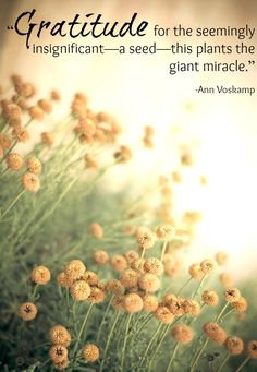 Do you need to plant a seed today?  #GratefulMuch