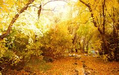 Gallery: Readers' Fall Color Photos