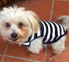 Knitted dog coats/jumpers