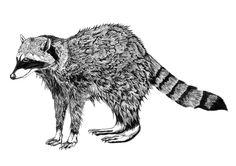 Raccoon Art Print by Emma Fitzgerald