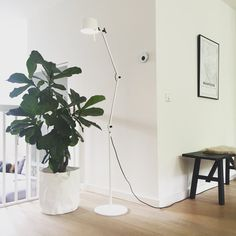 Ficus Lyrata | Interieur design by nicole & fleur Ficus, Garden Ideas, Interiors, Nature, Flowers, Home Decor, Style, Swag, Naturaleza