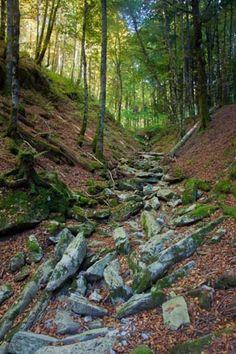 La selva de Irati, paisaje otoñal
