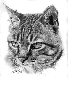 "This cat portrait pencil drawing is of a tabby cat called ""Mum Cat""."