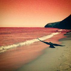 @ptaki #bird #sunset #plaża #artystyczne