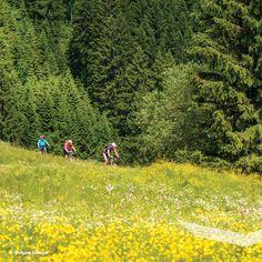 🚵♀️ Radeltipp: Ebenforstalm - Gaißhansl, Rundradtour Anspruchsvolle Mountainbiketour von Scheiblingau (Molln/Breitenau) über die Ebenforstalm ins Reichraminger Hintergebirge. Retour über den Gaißhansl und Hausbach zum Ausgangspunkt. . 🚵  #nationalparkkalkalpen #tourderwoche  #entdecken #outdooradventures #findyourpark #nationalparks #neverstopexploring #berge  #mtb #biken #fahrradliebe #radeln #radliebe #mountainbiking  #cyclinglifestyle #naturliebe #allmountain #radeln #fahrradtour Mountain Biking, Nationalparks, Mtb, Golf Courses, Country Roads, Wilderness, Mountain Range, Alps