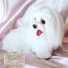 Princess Lily Kate