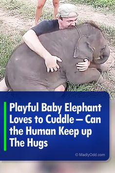 Taken at a sanctuary, this hilarious video shows an interaction between a human and an elephant. The tourist found himself in a funny situation when a baby elephant approached him. Elephant Love, Little Elephant, Funny Animals, Cute Animals, Different Types Of Animals, Animal Rescue Stories, Kitten Gif, Cute Animal Videos, Wildlife Nature