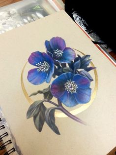 Black hellebore in marker and colored pencil on toned paper. For this I used Copic markers, Prismacolor markers, Faber Castell Polychromos colored pencils and Strathmore toned tan sketchbook