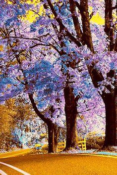 ~ Royal Empress Tree ~