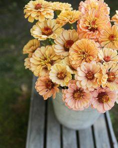 instagram | farmgirlsk Nature Plants, Garden Plants, Summer Flowers, Cut Flowers, Amazing Flowers, Beautiful Flowers, Flower Vases, Flower Arrangements, Bloom Where Youre Planted