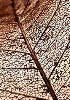 Lovely texture and bronze colour Natural Forms, Natural Texture, Leaf Texture, Patterns In Nature, Textures Patterns, Organic Patterns, Ernesto Artillo, Foto Macro, Leaf Skeleton