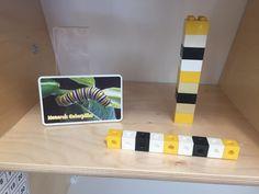 Monarch caterpillar patterns