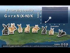 ▶ Population Ecology [3D Animation] - YouTube