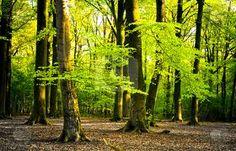 Результат пошуку Google на запит http://watermarked.cutcaster.com/cutcaster-photo-100115329-summer-forest.jpg