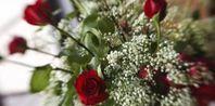 How to Grow Annual Baby's Breath (Gypsophila elegans)    I am going to grow my own wedding flowers