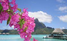 Purple flowers on a tropical beach HD Wallpaper