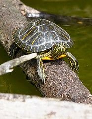Setting up the perfect home for your shelled friend doesn't have to be difficult. This article takes the guesswork out of how to create a turtle habitat. Baby Tortoise, Tortoise Turtle, Tortoise Care, Turtle Care, Pet Turtle, Reptiles, Amphibians, Betta, Turtle Habitat