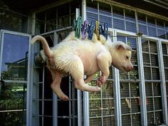 animal cruelty news | Stories of Animal Cruelty - News - Bubblews - WHAT IS THIS