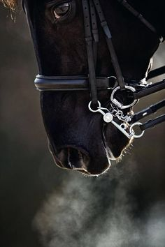 Black - Horse - Breath