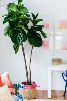 Greenery in the home!