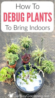 Debugging And Cleaning Potted Plants Before Bringing Them Back Inside Is Crucial. Pursue These Easy Steps To Bring Outdoor Plants Inside Without Bugs. Indoor Vegetable Gardening, Home Vegetable Garden, Organic Gardening, Gardening Vegetables, Diy Garden, Garden Projects, Garden Steps, Garden Care, Garden Bed