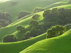 Love! The rolling oak woodlands of Little Briones Ridge reflect the green glow of early spring. It's one of 65 East Bay Regional Park District parcels where colorful hills can refresh the soul.