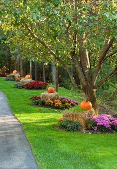 35 Amazing Backyard and Front Yard Decoration Idea for Autumn This Year - Bepflanzung Driveway Landscaping, Landscaping With Rocks, Landscaping Ideas, Acreage Landscaping, Backyard Ideas, Landscape Designs, Fall Landscape, Traditional Landscape, Yard Design