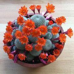 """Mr. cacti .…"""""""